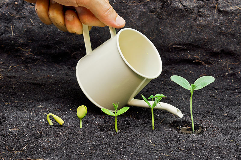 Image of a hand holding a small watering can, pouring water onto small growing sprouts