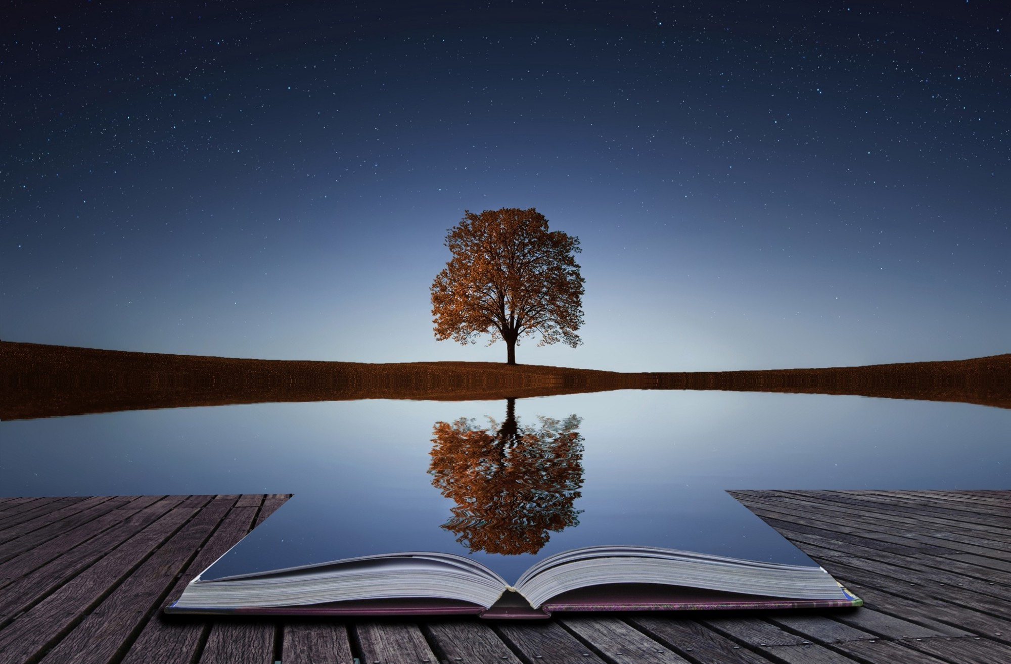 Image of a tree reflection on a smooth surface